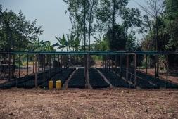 Kijani Forestry Nursery